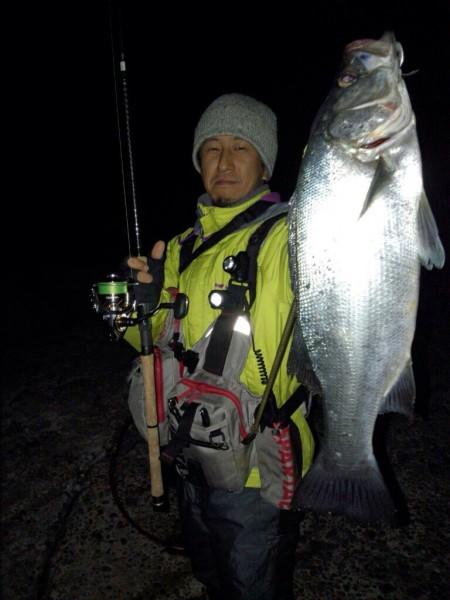 石川県 金沢市 ヒラスズキ